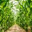 Ny aftale sikrer grønnere biogasproduktion